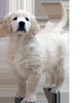 cachorros-modulo